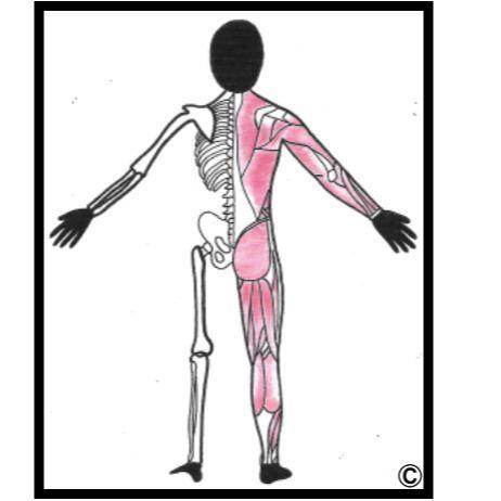 Massagepraxis Andi